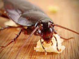 Какви са начините за борба против хлебарки?